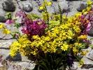 bouquet de nadine